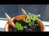 Бизнес идея из США: эко-карандаш с капсулой растений