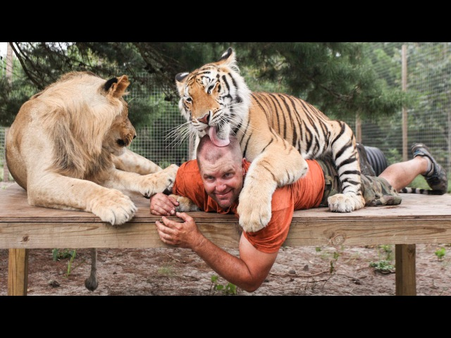 Big Cat Enthusiast Owns Six Tigers And Two Lions