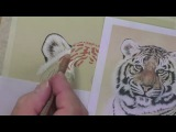 Draw a Tiger using Pastel Pencils