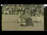 Старое видео (кетч-доги)