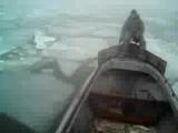 браконьеры во льдах Азовского моря