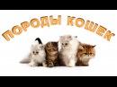 Породы кошек для детей Развивающее видео Познаём Мир