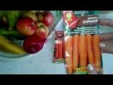 Подготовка семян моркови к посадке. ВСЕ О ВЫРАЩИВАНИИ МОРКОВИ