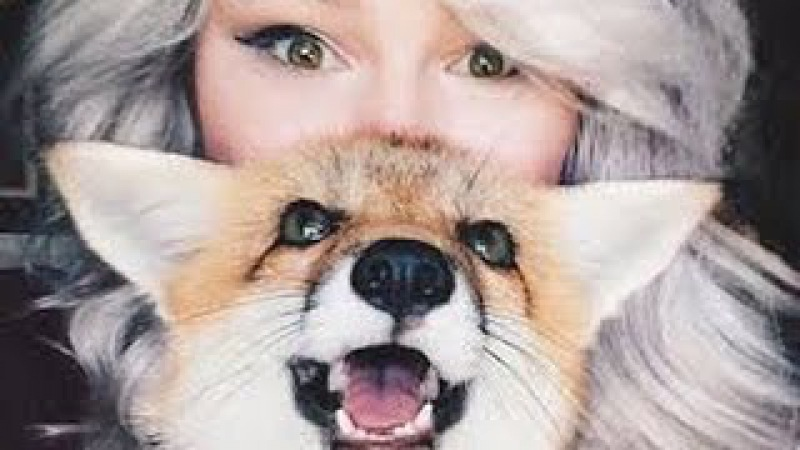 Самая жизнерадостная домашняя лиса в мире
