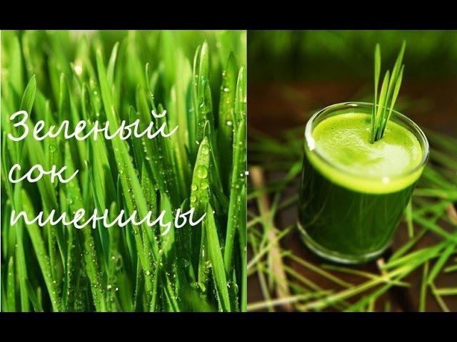 Зеленые ростки пшеницы. Витграсс