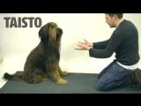 Финский маг Jose Ahonen показал как собаки реагируют на фокус