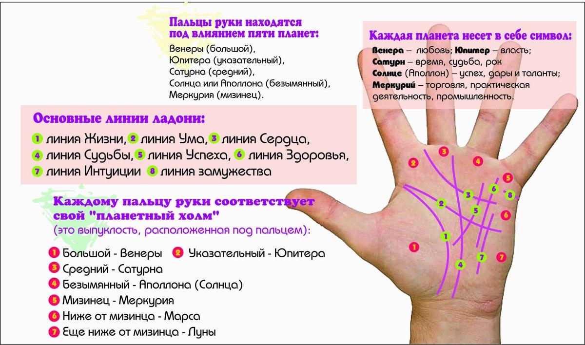 Где находятся линии жизни на руке