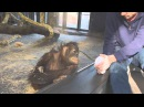 Реакция обезьяны на простой фокус!