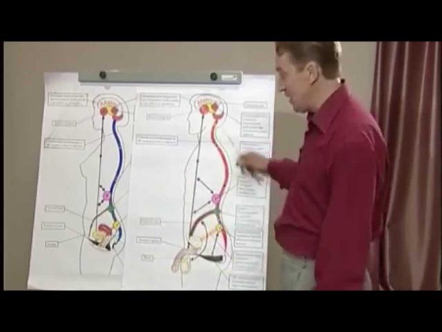 Известный сексолог Фролов, о лобково-копчиковой мышце