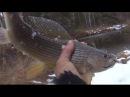 Рыбалка на огромного хариуса Там где живет медведь Девственная тайга Ловля хариуса полная