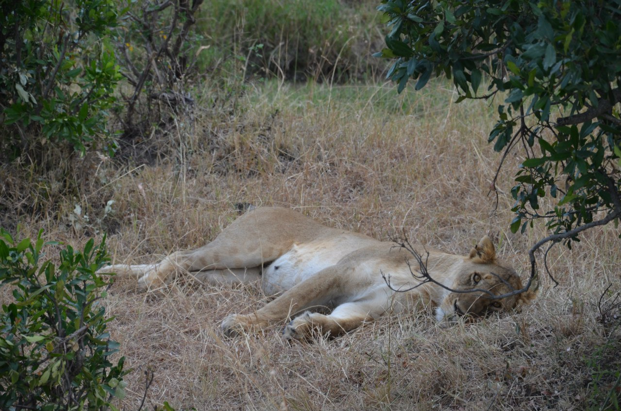 Кения, Танзания (Занзибар)