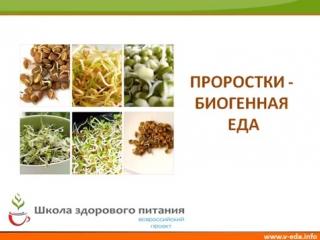 Пророщенная пшеница (польза проростков)