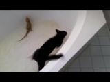 Кот попал в ловушку-ванную с ящерицей