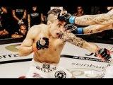 Thomas Almeida|||Highlight 2016|MMA|Knockouts