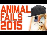 Funniest Animal Fails Compilation 2015
