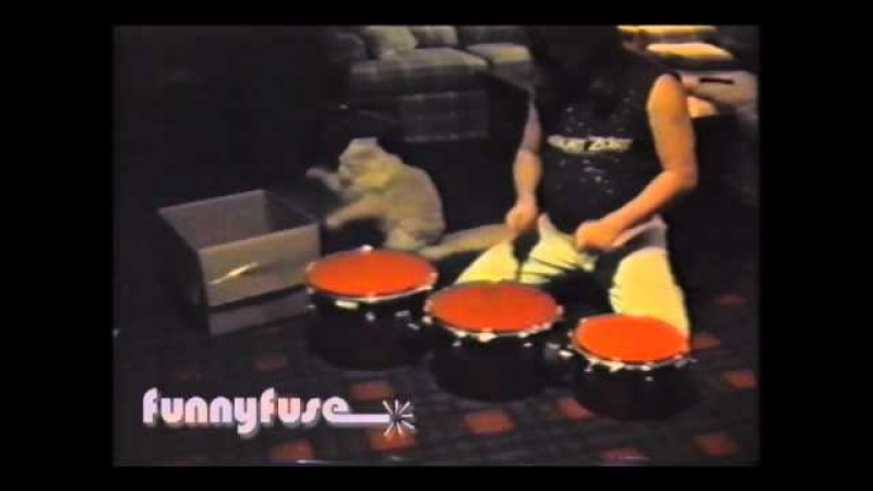 FunnyFuse Faves Cat Percussionist