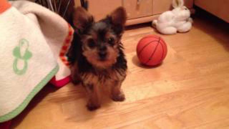 Hunde Baby Verspielte Bella !