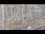 Встреча с бурым медведем 24.04.16 верховье р.Коваш