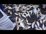 Fish market OAE 2014