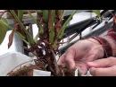 Самые красивые комнатные цветы Антуриум размножение и уход