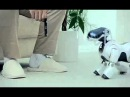 Sony Aibo ERS-7 promo clip