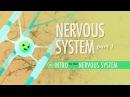 Kids' English | The Nervous System, Part 1: Crash Course A P 8