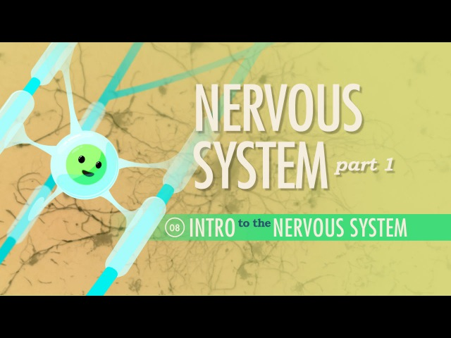 Kids' English The Nervous System Part 1 Crash Course A P 8