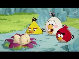 ЗЛЫЕ ПТИЧКИ - Angry Birds мультфильм - 1 сезон - 5 серия - Звуки из яиц - мультик