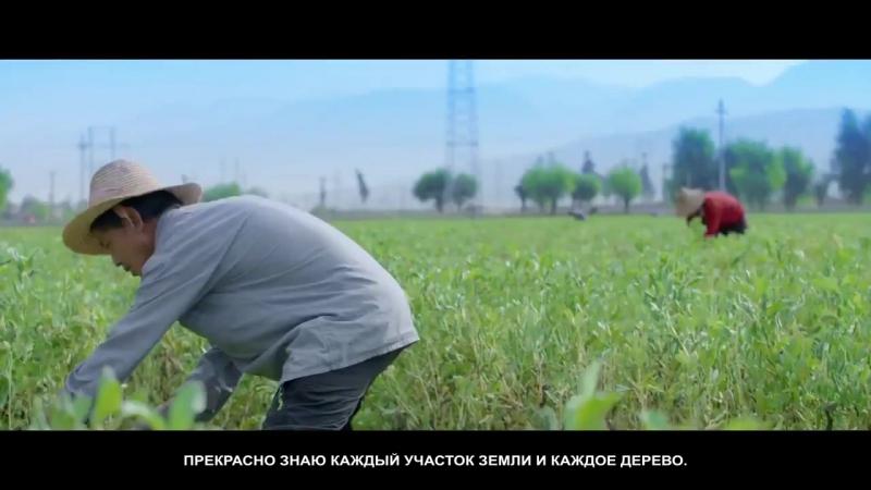 Производство Сосновой пыльцы корпорация Новая Эра Guozhen