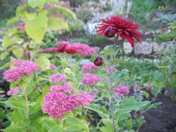 Осенний сад красочный и яркий Дарит настроение и красоту!