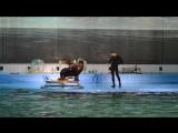 Дельфинарий на крестовском СПБ. Морская львица - Варя.