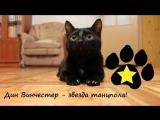 Кошачьи стили танцев от Дина Винчестера