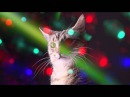 Meow Mix® Song | EDM Cat Remix by Ashworth