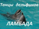 Batumi Танцы дельфинов Ламбада Дельфинарий Батуми