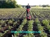 Окучивание картофеля мотоблоком Салют