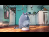 Трейлер к мультику «Тайная жизнь домашних животных» (2016)