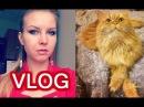 VLOG: Первая брачная ночь / Ловлю кота / Обжорство