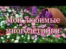Мои любимые цветы на даче многолетники ч 1