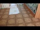 Приучаем собаку к туалету