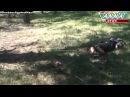 18 ДНР Горловская мадонна Убитая мама с ребенком в результате бомбежки карателе...