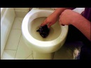 Snake In The Toilet