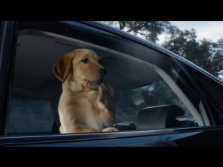 Budweiser USA_ Super Bowl XLVIII Commercial _ Puppy Love