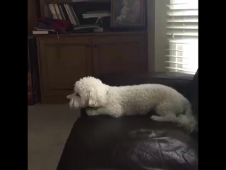 Когда пора к ветеринару