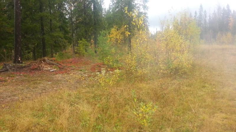 Виталик - Злой Лесоруб, огнем из 12 калибра срезает макушки 20150919_120611