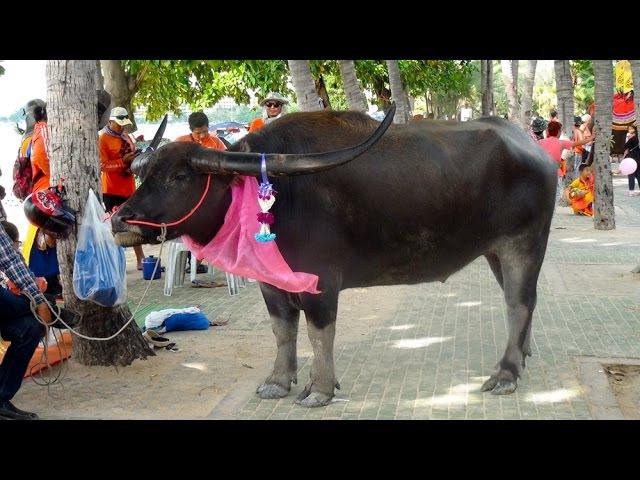 Как по Бичке волов водили. As oxen walked along Beach Road