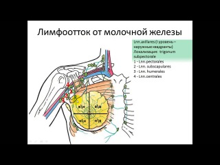 Лимфоотток от молочной железы 241113 pptx