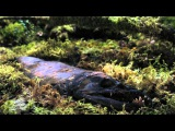 Первозданная природа. Таинственный Перуанский Лес Документальный фильм 2015.
