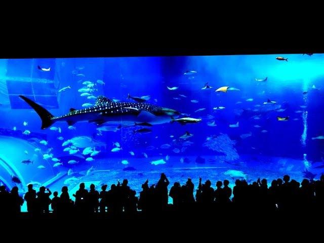 (4K)-2016 - Okinawa Churaumi Aquarium