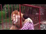 Обнимашки! Животные любят обниматься с человеком