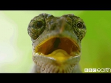 BBC_Earth_Giant_mole_rat_TheHunt_12272426_781140955329181_1284693721_n